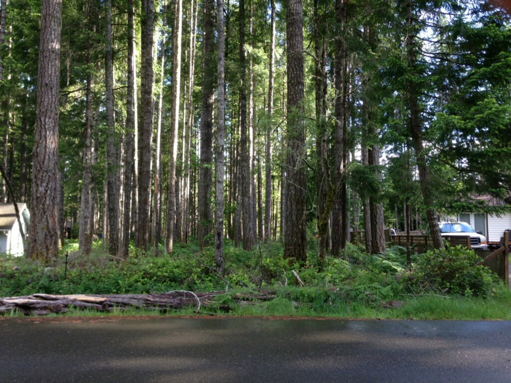 31 N Coho Ct, Hoodsport, WA - USA (photo 1)