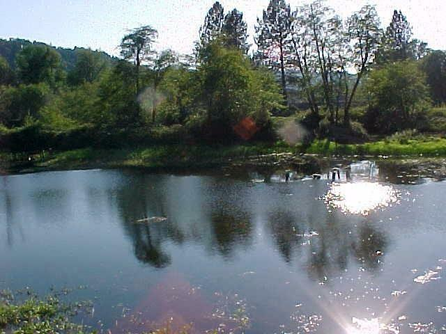 1690 Leland, Sunnyvalley, OR - USA (photo 3)
