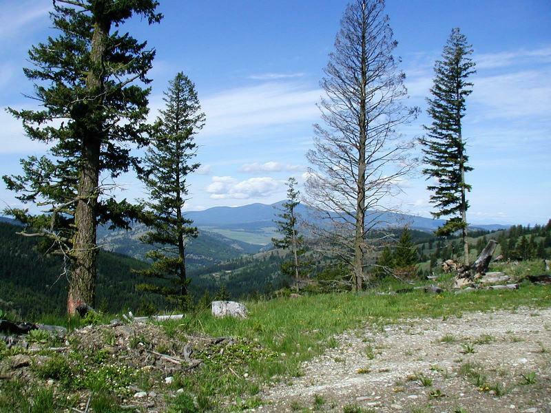 Tbd Horseshoe Mountain Rd, Republic, WA - USA (photo 2)