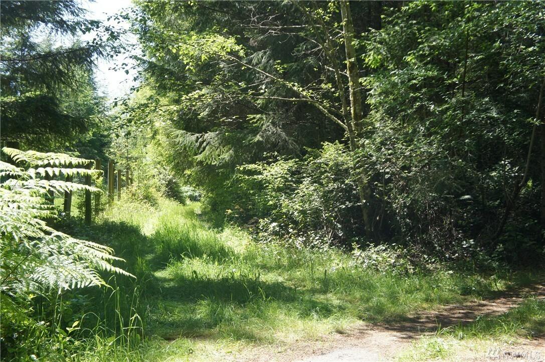 0 Chickadee Lane, Quilcene, WA - USA (photo 4)