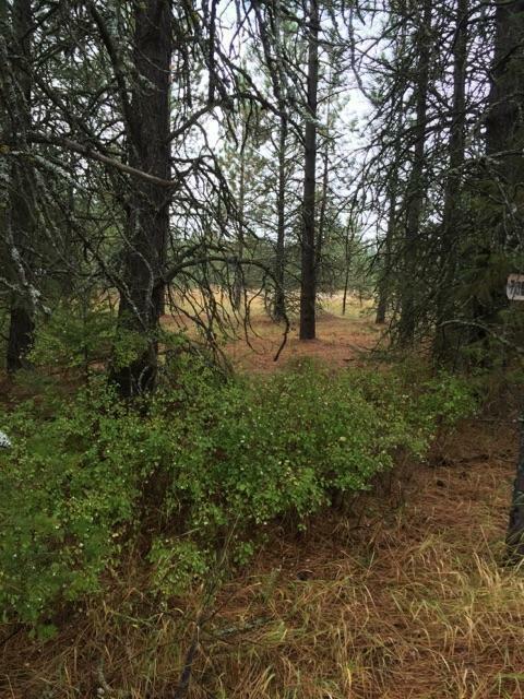 7060 W Tesemini Dr, Spirit Lake, ID - USA (photo 5)