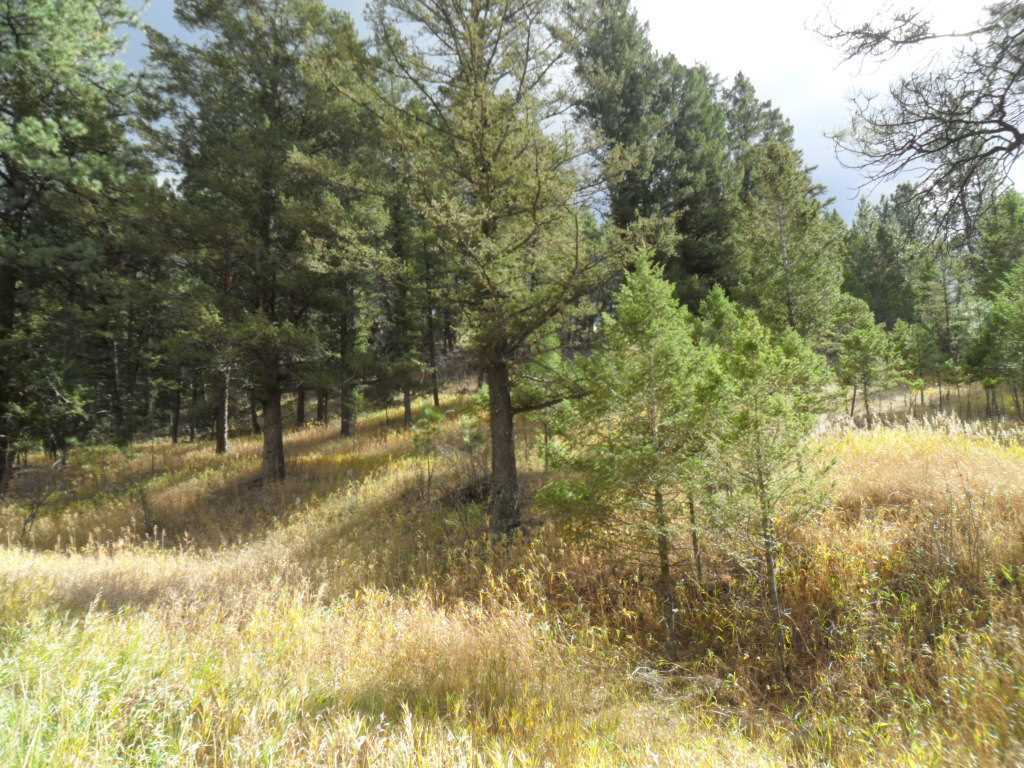 58 Hanging Tree Gulch, Clancy, MT - USA (photo 1)