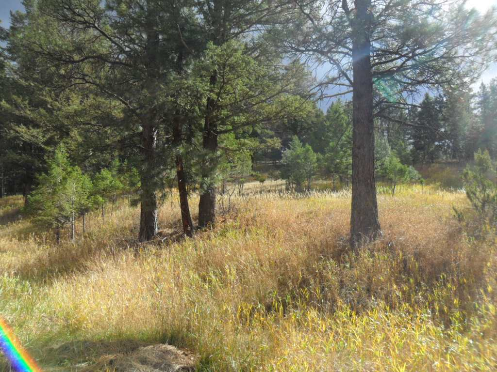 58 Hanging Tree Gulch, Clancy, MT - USA (photo 5)