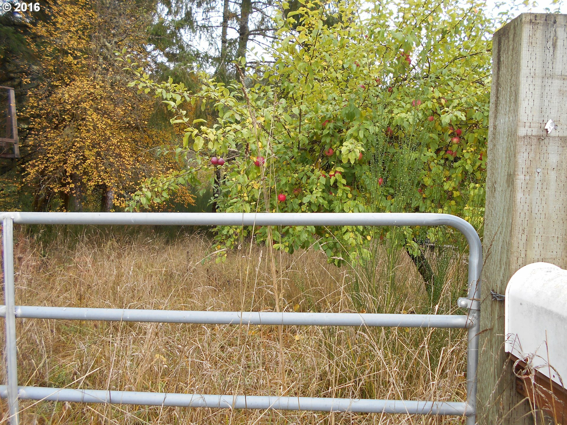 39525 Sw Fort Hill Rd, Willamina, OR - USA (photo 4)