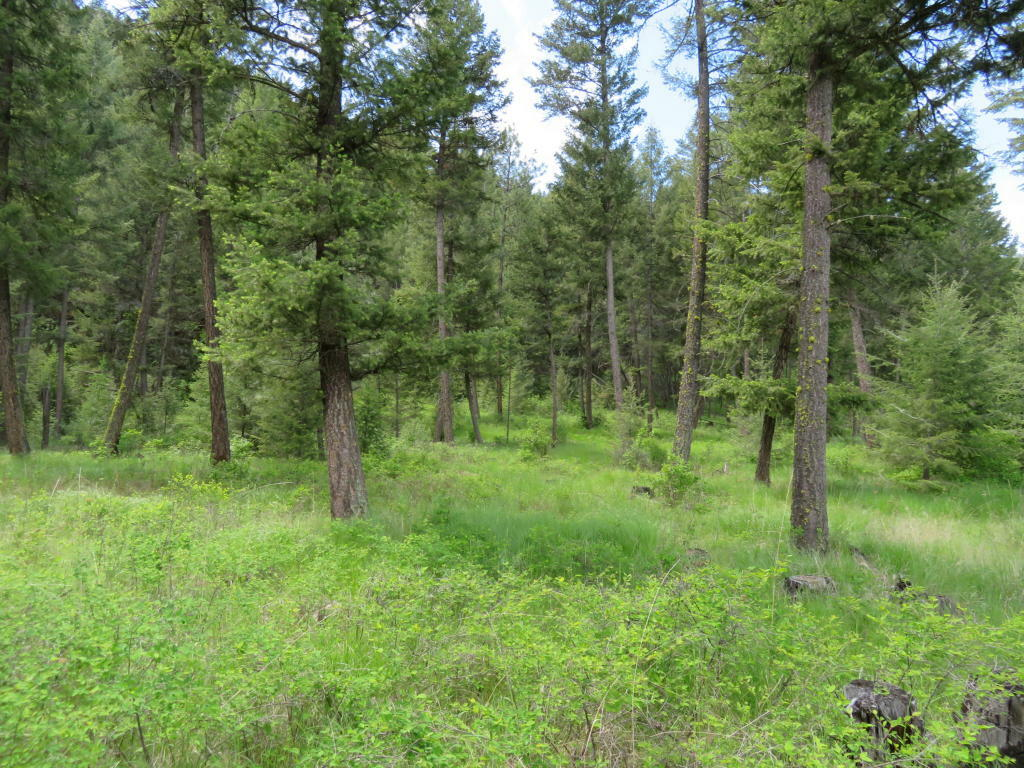 Tbd Kettle River Rd, Curlew, WA - USA (photo 5)