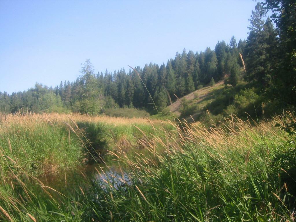 X Suther Ln, Elk, WA - USA (photo 3)
