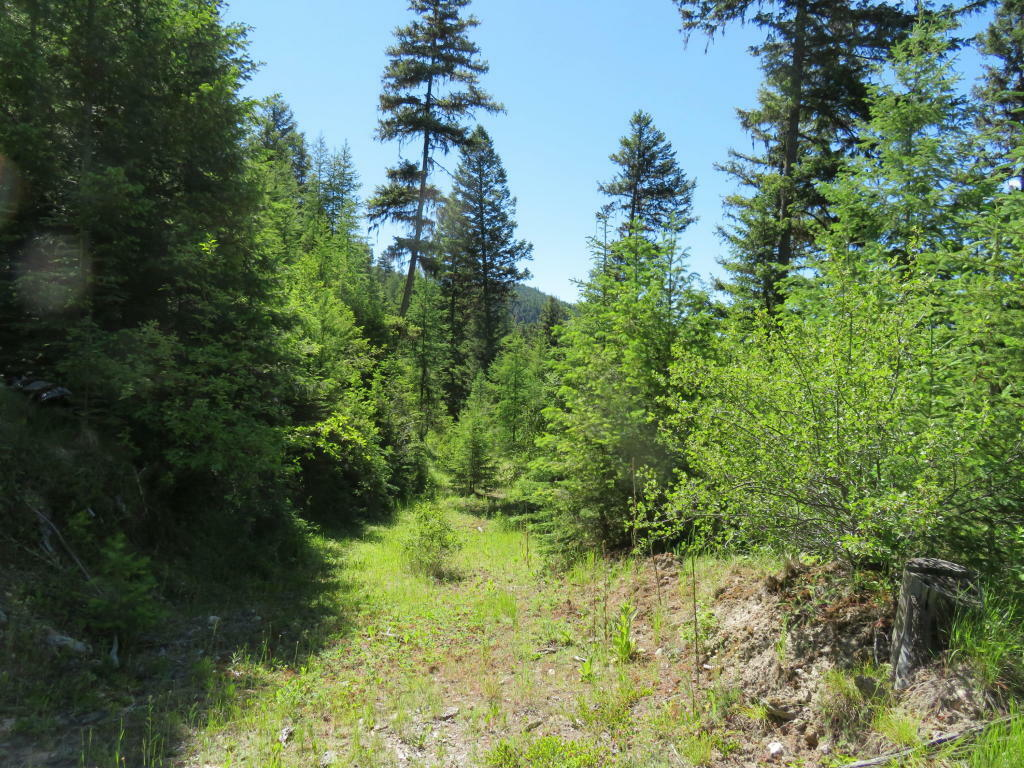 78 East Fork Cougar Creek Rd, Wauconda, WA - USA (photo 4)