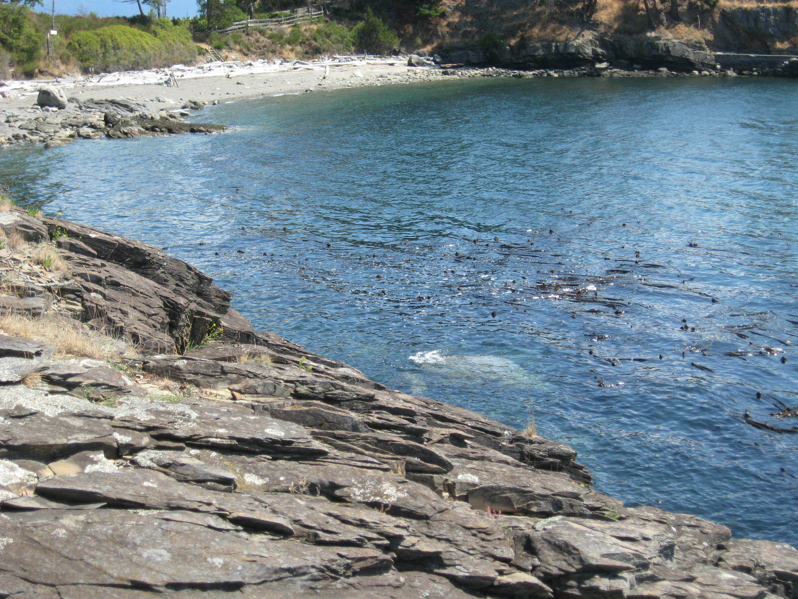 879 deer point road, orcas island (photo 5)
